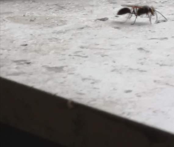 Ist das eine Ameise oder eine Wespe?
