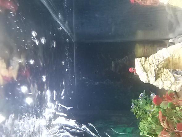 Bakterienblüte? - (Fische, Aquarium, Aquaristik)