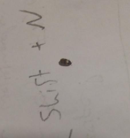 Käfer - (Insekten, Ungeziefer, Schädlinge)