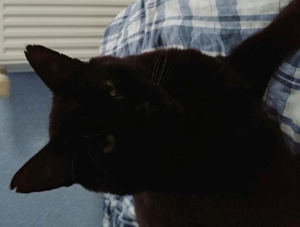 ... - (Tiere, Katze, Haustiere)
