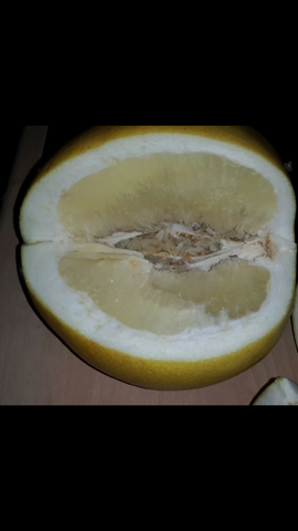 .. - (Obst, melone)