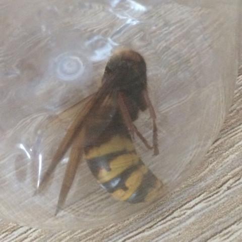 Bild1 - (Tiere, Insekten, Bienen)
