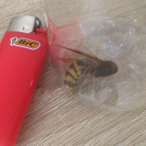 Bild2 - (Tiere, Insekten, Bienen)