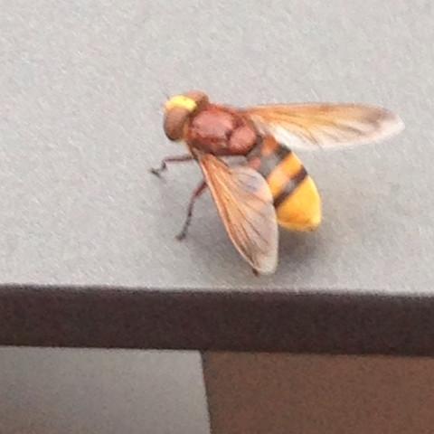 Biene, Wespe, Falter - (Bienen, Falter)