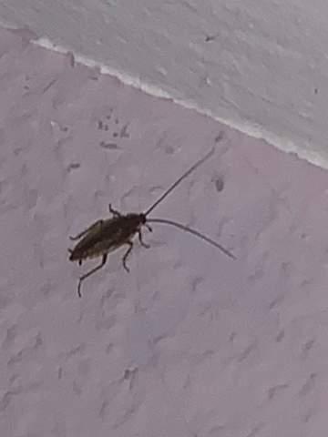 Ist das eine Kakerlake ganz dringend?