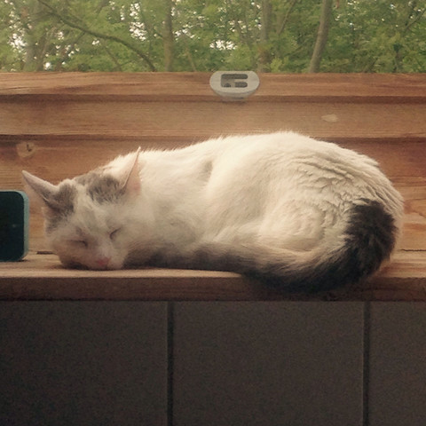 Bild 3 - (Katze, Kartäuser)