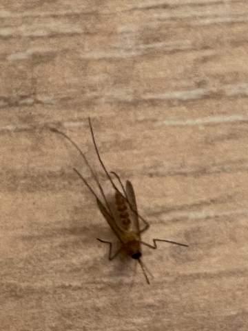 Ist das eine Tigermücke?