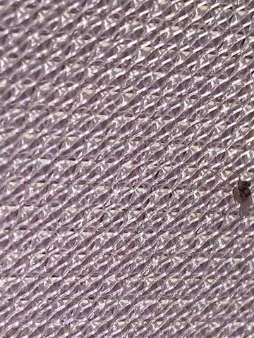 Ist das eine Trauermücke?Wenn ja ist das schädlich für noch eher junge Kakteen (circa 2 jahre alt)?