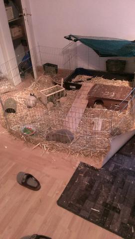 Gehege - (Kaninchen, Gehege)