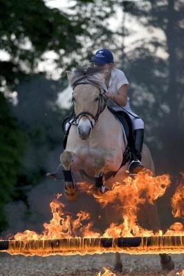 hilfe - (Pferde)
