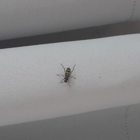 - (Bilder, Asien, Mücken)