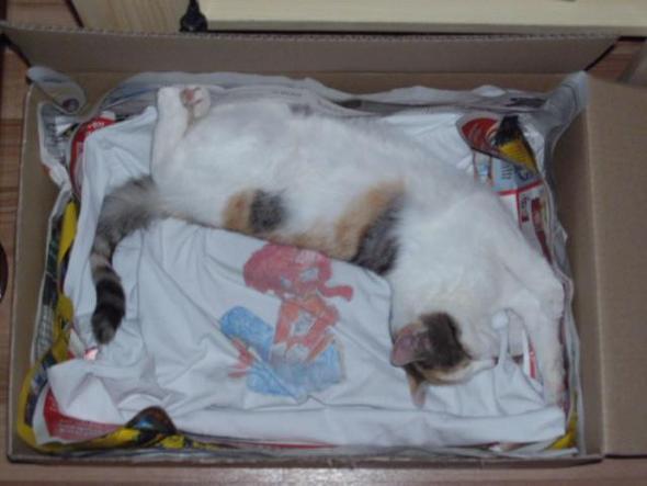 3. verion Karton - (schwanger, Katze, Geburt)