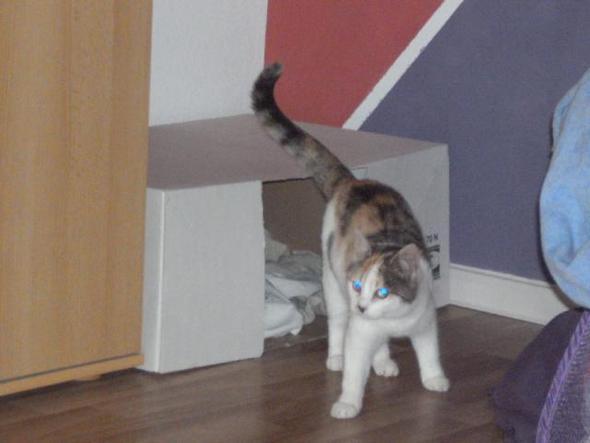 1. version Karton - (schwanger, Katze, Geburt)
