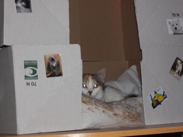 2. version Karton - (schwanger, Katze, Geburt)