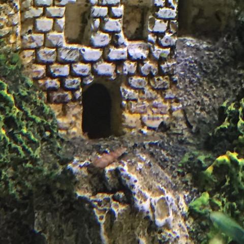 Schnecke die überlebt hat :D - (Wasser, Fische, Aquarium)