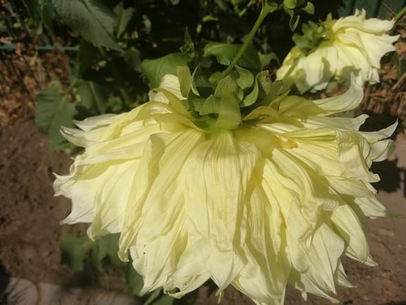 - (Garten, Natur, Blumen)