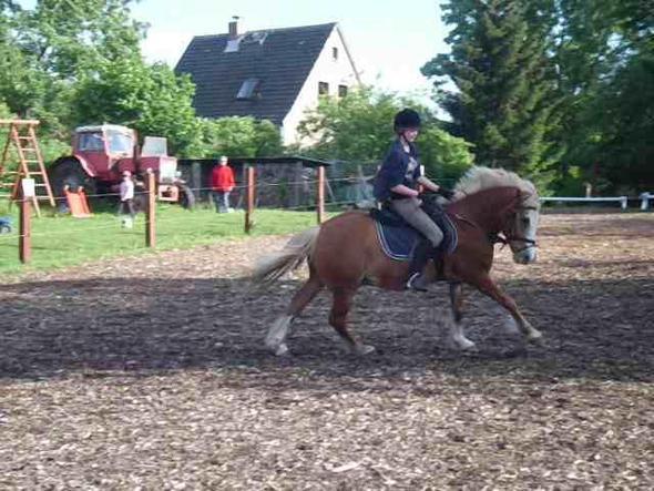 ööööhm - (Pferde, Reiten, Reiterhof)