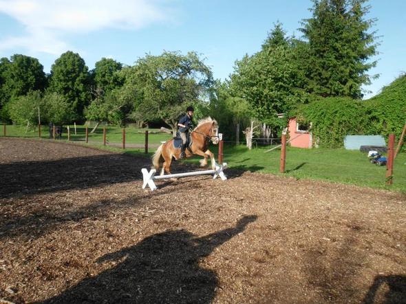 jaaaaaaa - (Pferde, Reiten, Reiterhof)