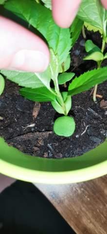 Ist das Schimmel/Kalk bildungen bei meiner Pflanzenerde?