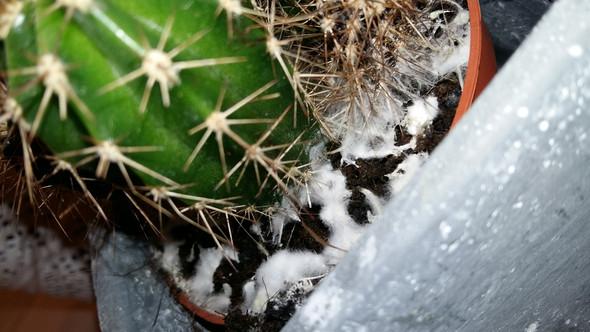 Bäääääh - (Pflanzen, Schimmel, kaktus)