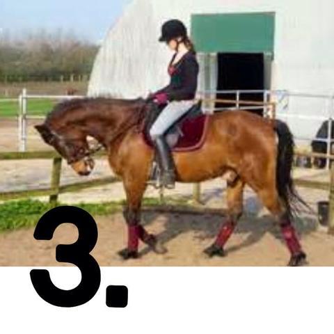 Bild 3  - (Pferde, Reiten, Rollkur)