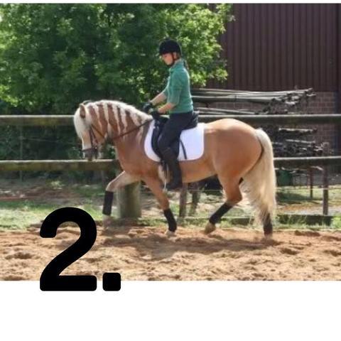 Bild 2 - (Pferde, Reiten, Rollkur)