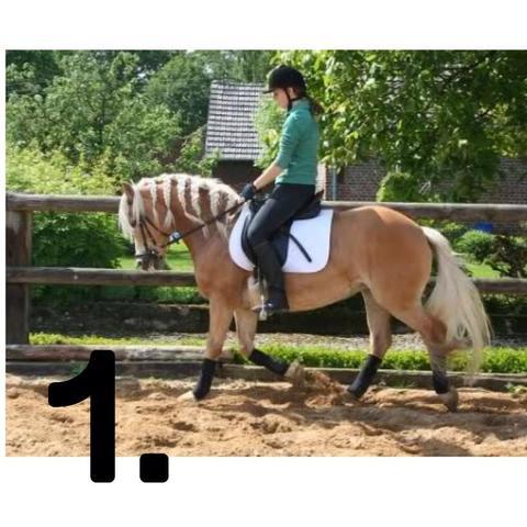 Bild 1  - (Pferde, Reiten, Rollkur)