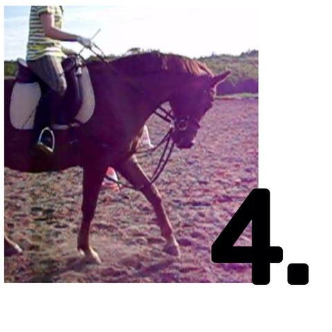 Bild 4 - (Pferde, Reiten, Rollkur)