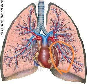 Herz seite linken stechen der auf Welche Organe