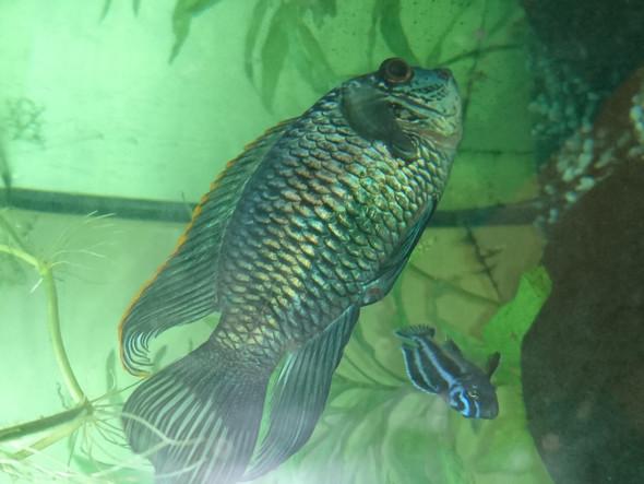 - (krank, Fische, Aquarium)