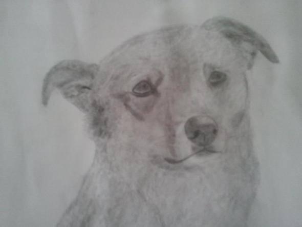 Hund - (Tiere, Hund, Haustiere)