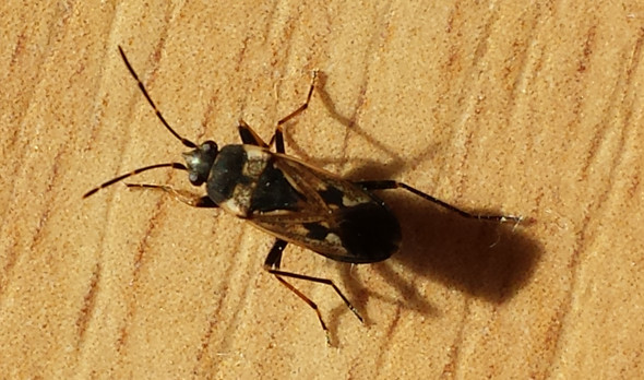 Käfer - (Tiere, Insekten, Käfer)