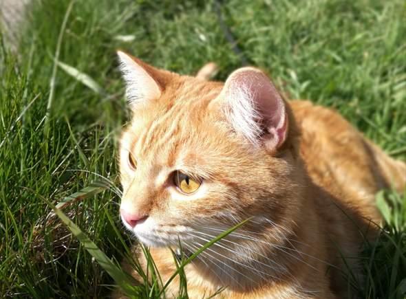 Ist die Katze meiner Freundin Süß?