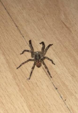 Das ist die spinne  - (Tiere, Spinne)