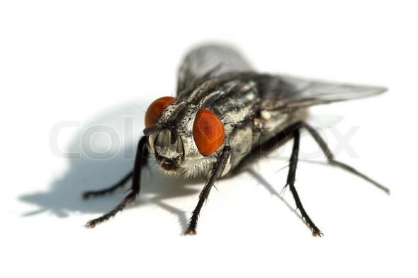 Ist Dies Eine Grosse Fliege Oder Schon Eine Bremse Tiere Garten