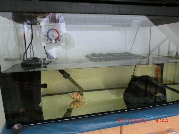 Kleiner Kühlschrank Für Schildkröten : Ist diese haltung wasserschildkröte artgerecht tiere schildkröten