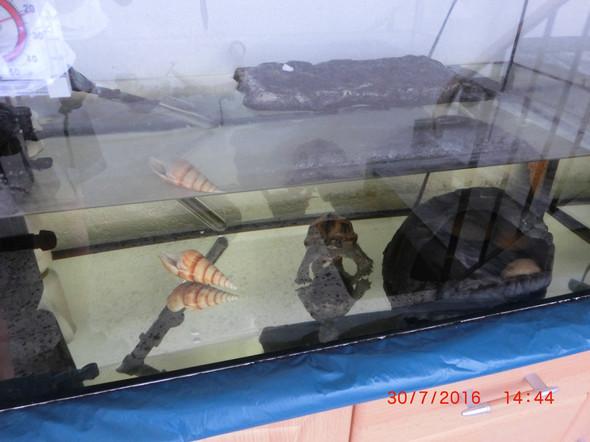 Mini Kühlschrank Für Schildkröten : Wasserschildkröten einkaufsliste