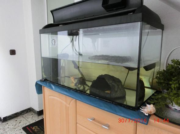 Schildkröte3 - (Tiere, Haltung, Schildkröten)