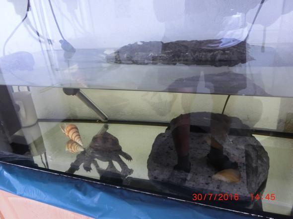 Schildkröte4 - (Tiere, Haltung, Schildkröten)