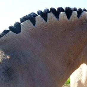 Frisur des Pferdes - (Gesundheit, Pferde, Frisur)