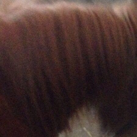 Meines Pferdes - (Gesundheit, Pferde, Frisur)
