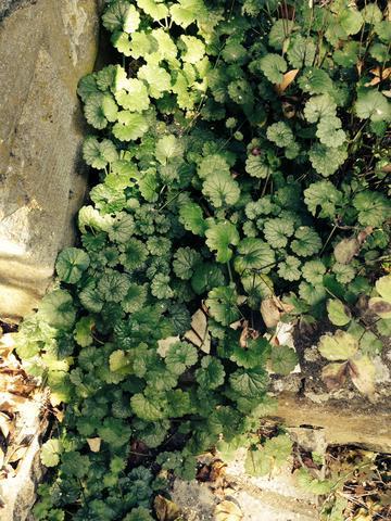 Ist Diese Pflanze Fur Meerschweinchen Essbar Tiere Garten Pflanzen