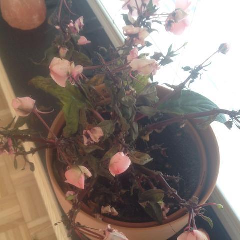 Die Blume  - (Pflanzen, Blumen, retten)