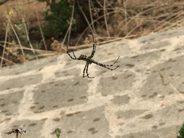 - (Spinnen, Spinne, Amphibien)