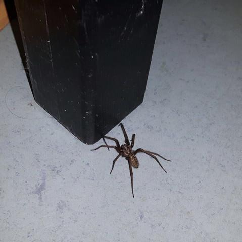 Was ist das für eine Spinne? - (Spinnen, Spinnenart)