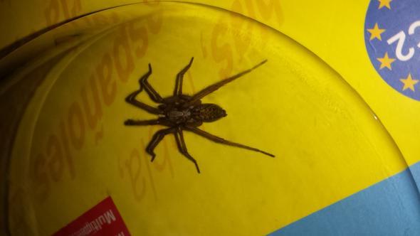 Rückansicht - (Gesundheit, Spinnen, Spinne)