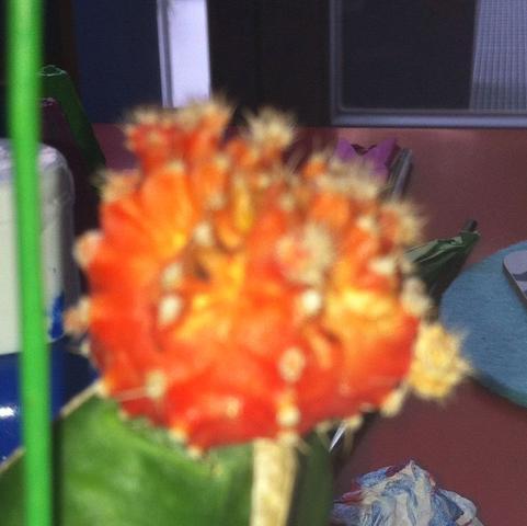 Ist dieser Kaktus krank?