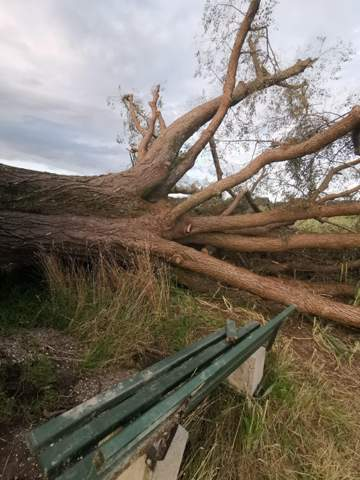 Ist dieser Zweig noch zu retten?
