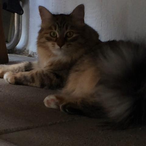 Meine Katze  - (Katze, Übergewicht)