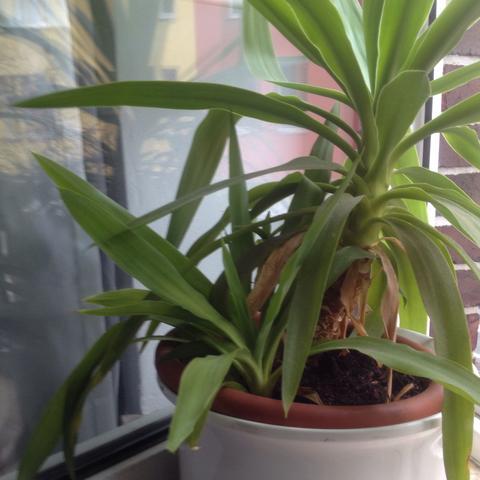 Das ist die Pflanze ist es schlimm ? - (Pflanzen, Natur, Vögel)